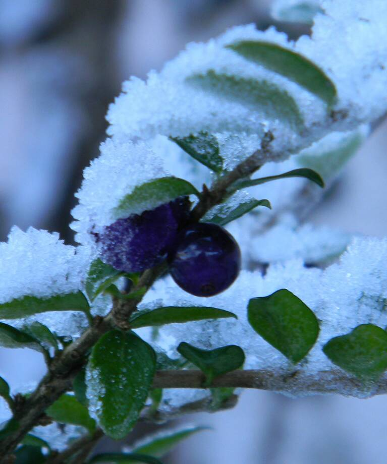 Winterimpression | Winterurlaub in Viehhofen | © viehhofen.at